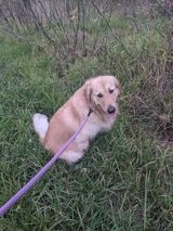 A dog sitting in the grass  Description automatically generated with low confidence